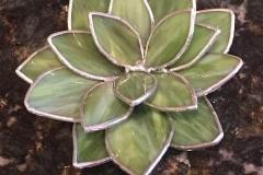 Elise-Andersen-green-petals